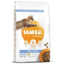 Iams Cat Adult Dental Chicken 10 kg