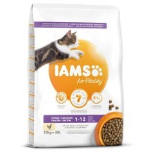Iams Cat Kitten Chicken 10 kg